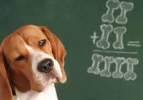Фото записи Собаки и арифметика