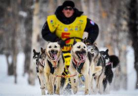 Фото записи Собачий спорт