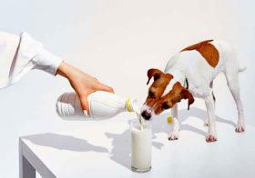 Молочные новости