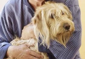 Фото записи Ветеринары информируют