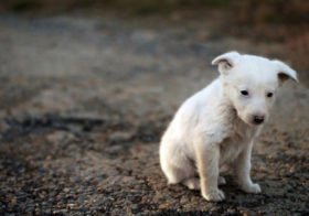 Фото записи Предложения зоозащитников